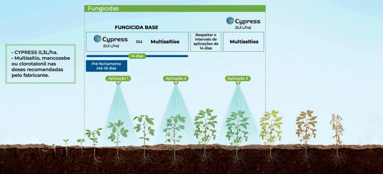 Posicionamento de Cypress na cultura de soja